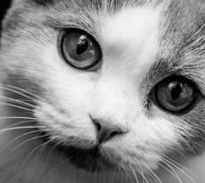 Lettiera gatto consigli