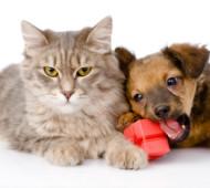 Promozioni cane e gatto