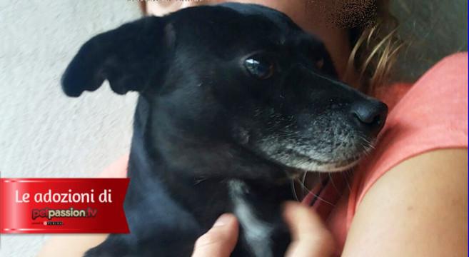 Cagnolina taglia piccola in adozione a roma petpassion blog for Nomi per cagnolini di piccola taglia