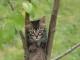I comportamenti predatori del gatto