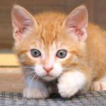 Fai da te: crea i giochi per il tuo gatto!