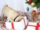 Regalo di Natale per cane e gatto
