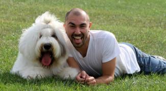 Cane felicità