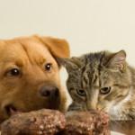 Il tuo cane e il tuo gatto sono in forma?
