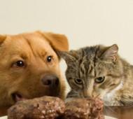 Cane e gatto in sovrappeso