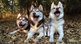 cani gatto amici