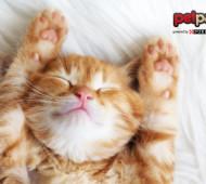 dormire-con-gatto