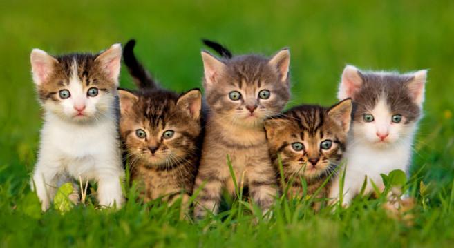 Sterilizzare per evitare abbandoni e gatti randagi for I gattini piccoli