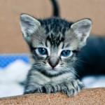 9 domande da porsi prima di adottare un gatto