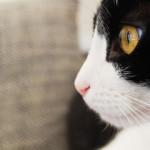 Storia di due gatti trovatelli che hanno riempito la mia vita…