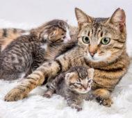 gatto neonato cure