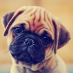Quando parli con il tuo cane lui capisce cosa dici: la ricerca