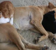 cane-cucciolo-gatto