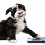 Novità tecnologiche per i nostri amati cani e gatti