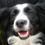 Perché i cani sorridono? Le vere ragioni del dog grinning…