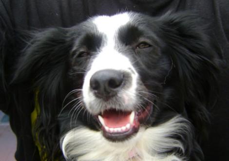 Cane che sorride (dog grinning)