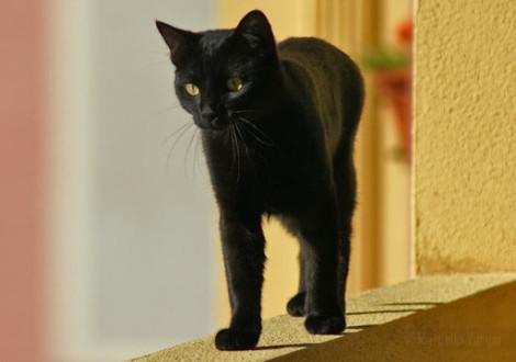 citazioni-gatto-nero