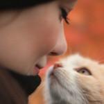 Come calcolare l'età umana del gatto