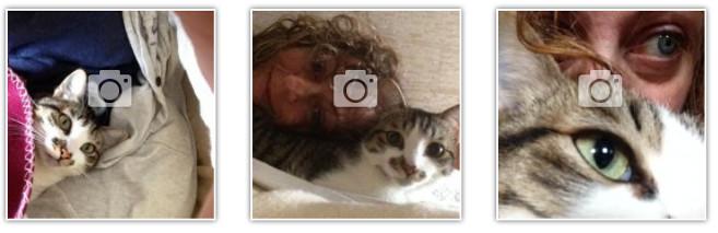 foto gattina