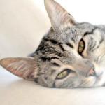 Gatto con la febbre: sintomi e rimedi
