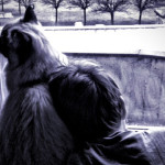 Storia del gatto Chopin e del suo piccolo amico Francesco