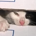 """Storia del gattino Pirata: il micio che """"fa la pasta"""" tutte le mattine!"""