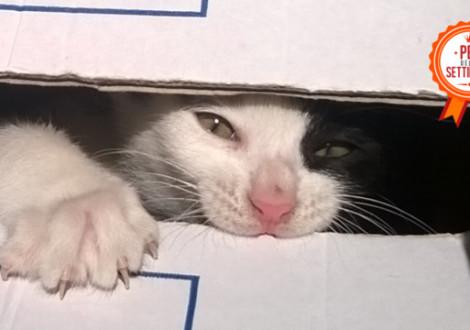 gatto scatola
