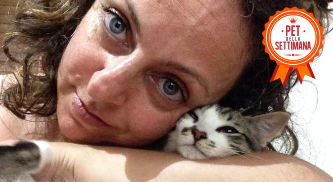 gatto-tenerezza