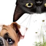 Cane, gatto… e allergie di primavera!