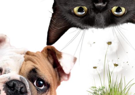 allergie-primavera-cane-gatto