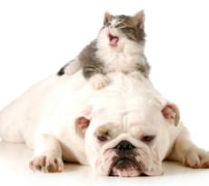 cane-gatto-pericoli-casa