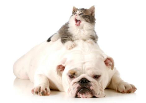 Petpassion Blog  La community italiana dedicata al mondo Pet! - Part 19