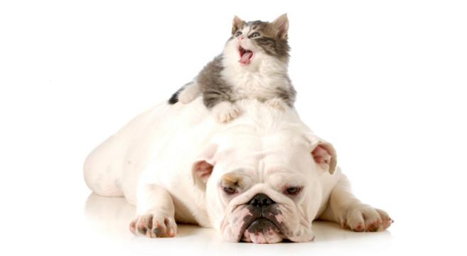 Pericoli in casa per cane e gatto come evitare gli - Gatto defeca per casa ...
