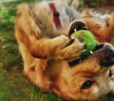 cane-giochini