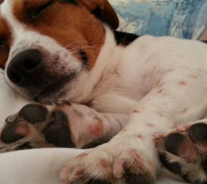 cane-polpastrelli-cuscinetti