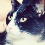 Gatti e donne: ti sveliamo la ragione di questo legame speciale [ricerca]