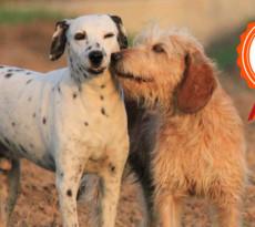 foto-cani-salvati