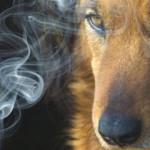 Il fumo passivo fa male anche a cani e gatti: campagna di sensibilizzazione [video]