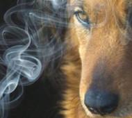 fumo-passivo-animali