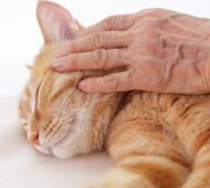 gatto-carezza