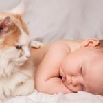 Gatti e bambini: regole di convivenza