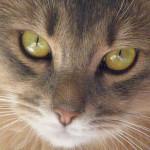 Proverbi, detti e credenze popolari sui gatti