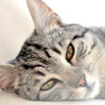Come avvicinarsi ed accarezzare un gatto nel modo giusto