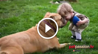 Video cani