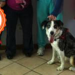 Come si diventa cane da pet therapy? La storia di Axel…
