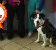 axel-cane-pet-therapy