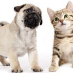Vinci subito tanti premi per cane e gatto!