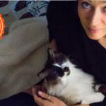 Foto di gatti e passioni condivise con gli amici felini