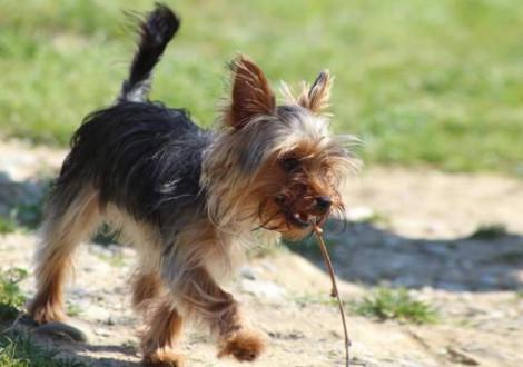 cane-passeggiata-parco