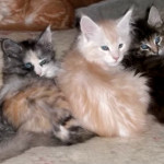 Colore e carattere del gatto: c'è un legame?